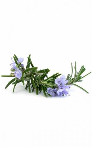 Эфирное масло Розмарина doTERRA (пробник) | doTERRA Roman Rosemary oil sample