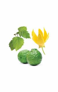 Смесь эфирных масел Шёпот от doTERRA (пробник) | doTERRA  Whisper essential oil sample