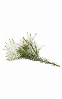 Эфирное масло чайного дерева doTERRA (пробник) | doTERRA melaleuca essential oil sample